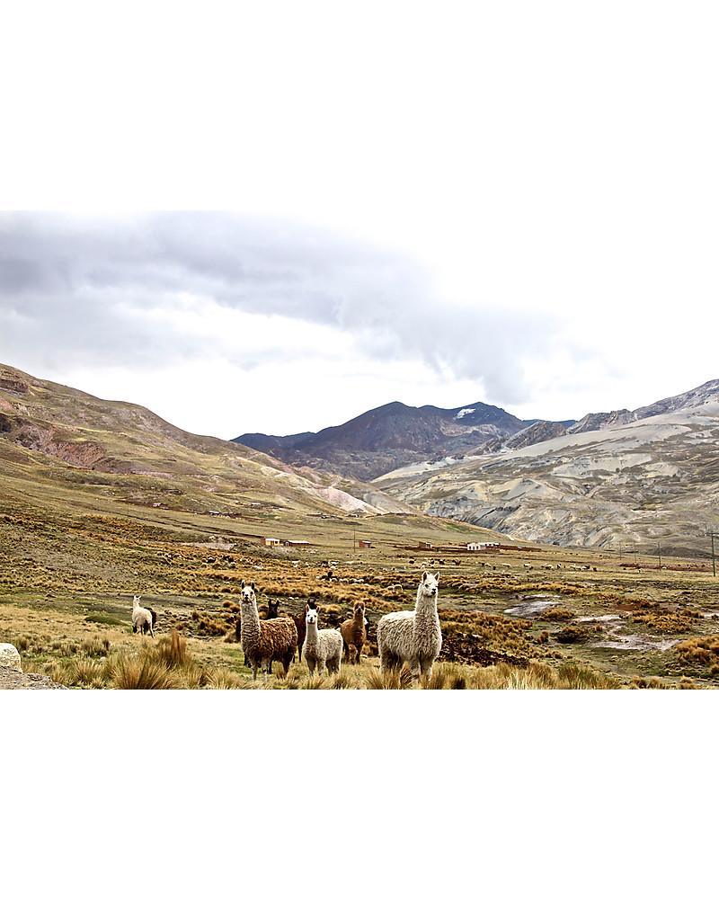 Esencia Condo, Scaldacollo con Coccinella, Tortora – 100% lana di ...