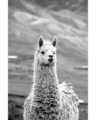 Esencia Guanti con Coccinella, Tortora – 100% lana di alpaca Guanti e Muffole