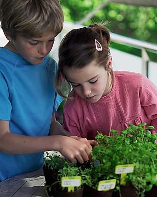 Sembra Mini Kit Orto Valerianella - Pianta, cresci, raccogli la tua piantina! Scienza e Natura