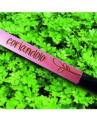 Sprout Matita Piantabile 100% Ecosostenibile - Coriandolo - Senza Scatola Giochi da Giardinaggio