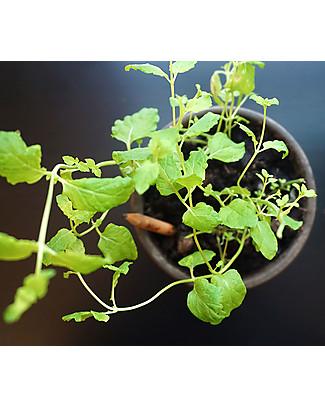 Sprout Matita Piantabile 100% Ecosostenibile - Menta Colorare