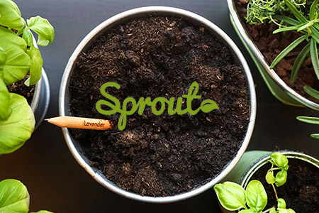Vendita Sprout online